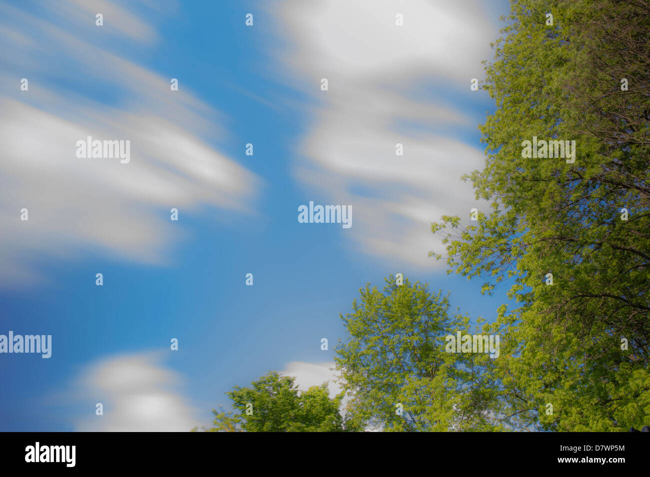 Fast Moving Clouds & Windy Blurry Trees - Stock Image