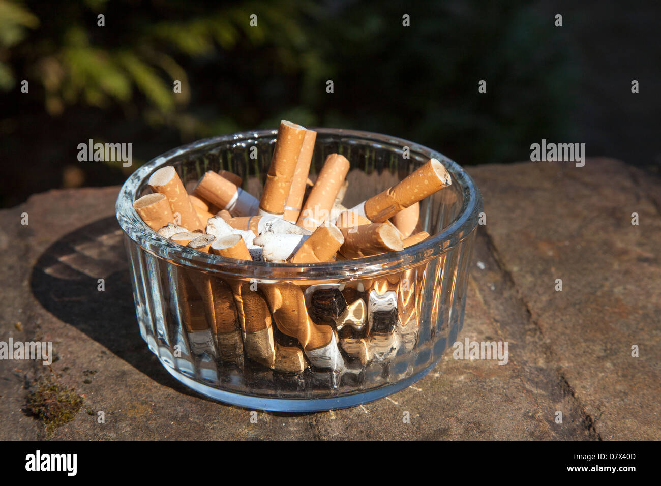 Cigarette Butts in Ashtray bowl - Stock Image