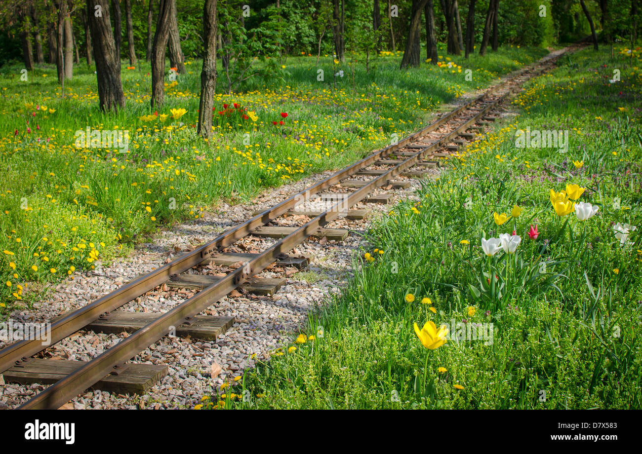 traintracks through romantic forest - Stock Image