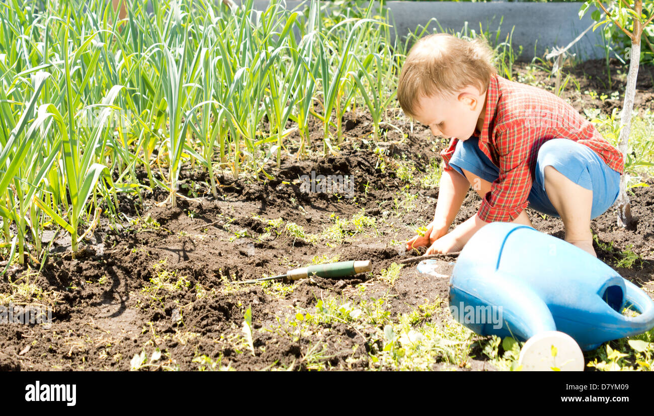 Little boy working in the garden crouched down on the soil amongst rows of fresh green plants - Stock Image