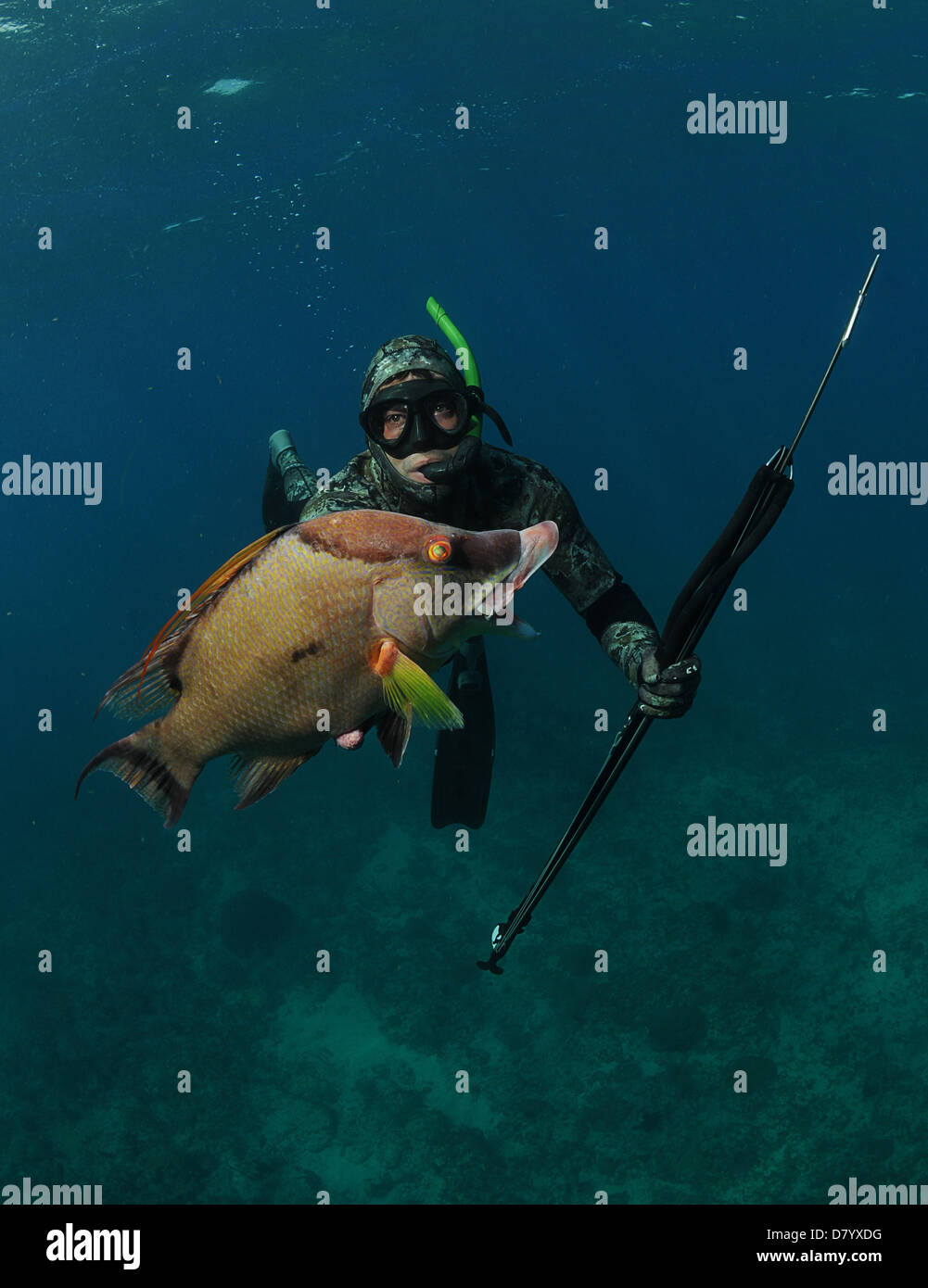 Spear Fishing Stock Photos & Spear Fishing Stock Images ...