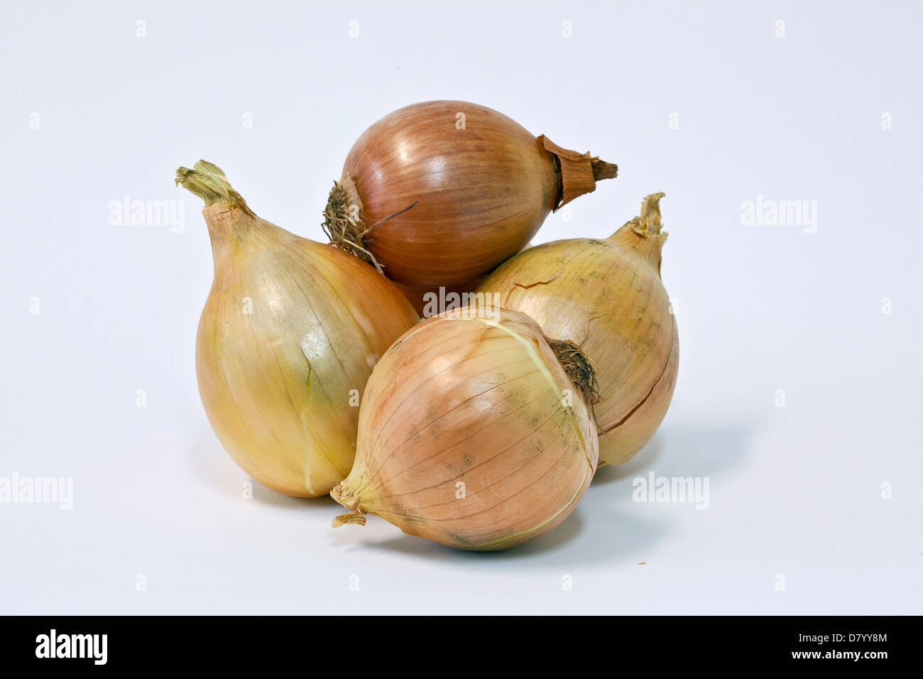 Four brown onions against a white background. - Stock Image