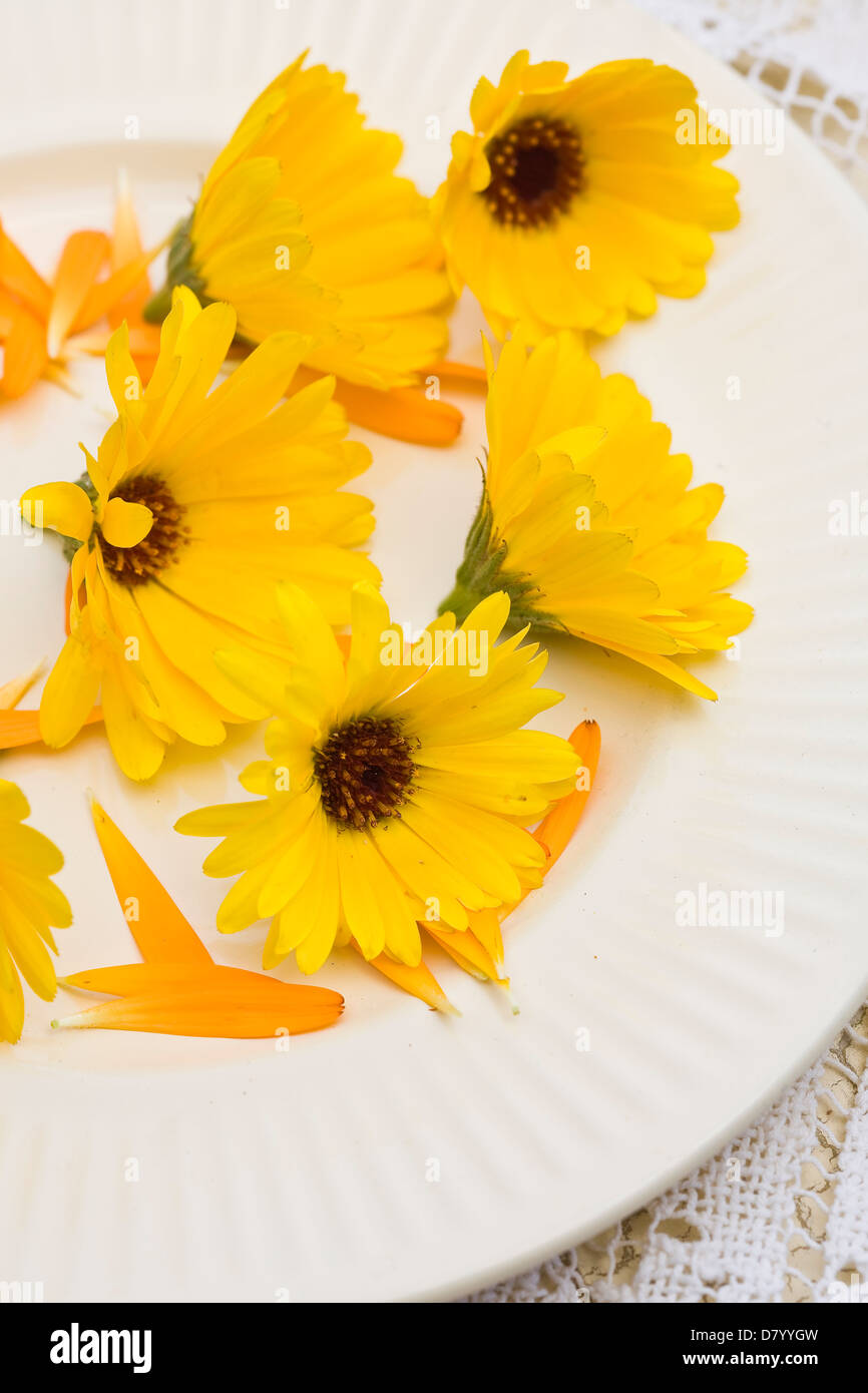Edible yellow Marigold flowers on a white plate. - Stock Image