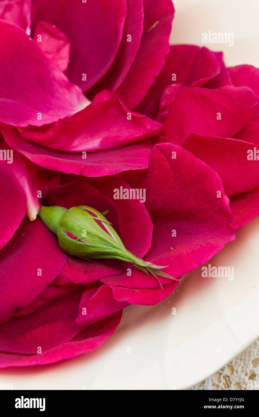 A pile of deep pink edible rose petals and a closed rose bud on a white plate. - Stock Image