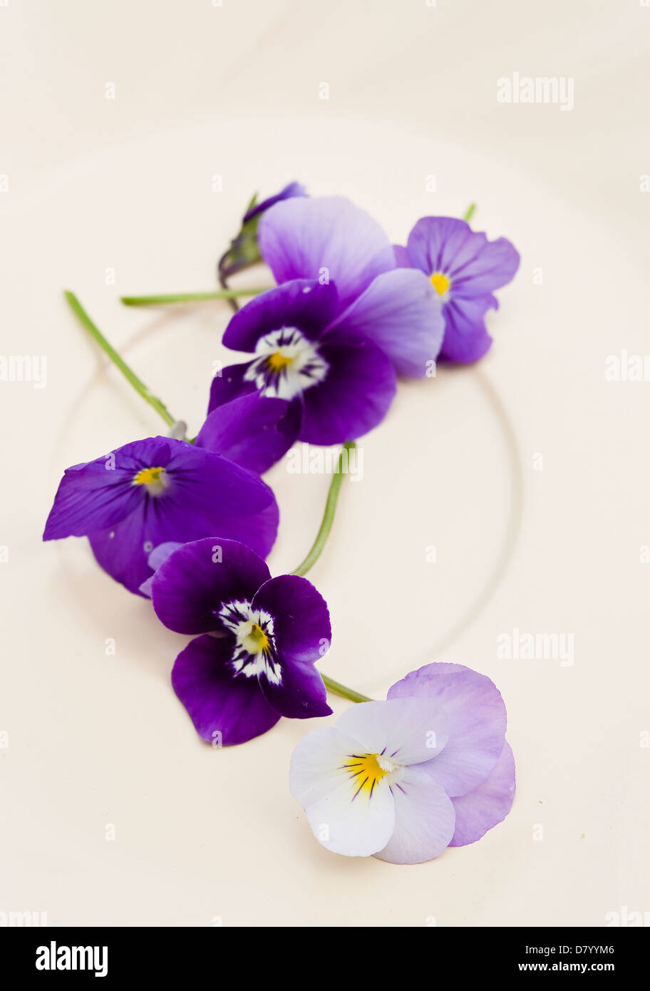 Purple edible violas on a white plate. - Stock Image