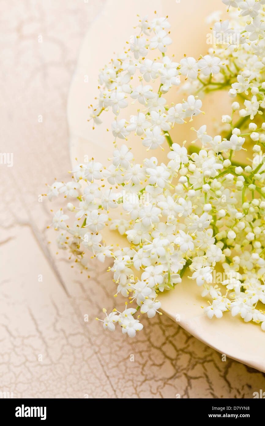 White edible elder flowers on an white plate and cracked-surface table. - Stock Image