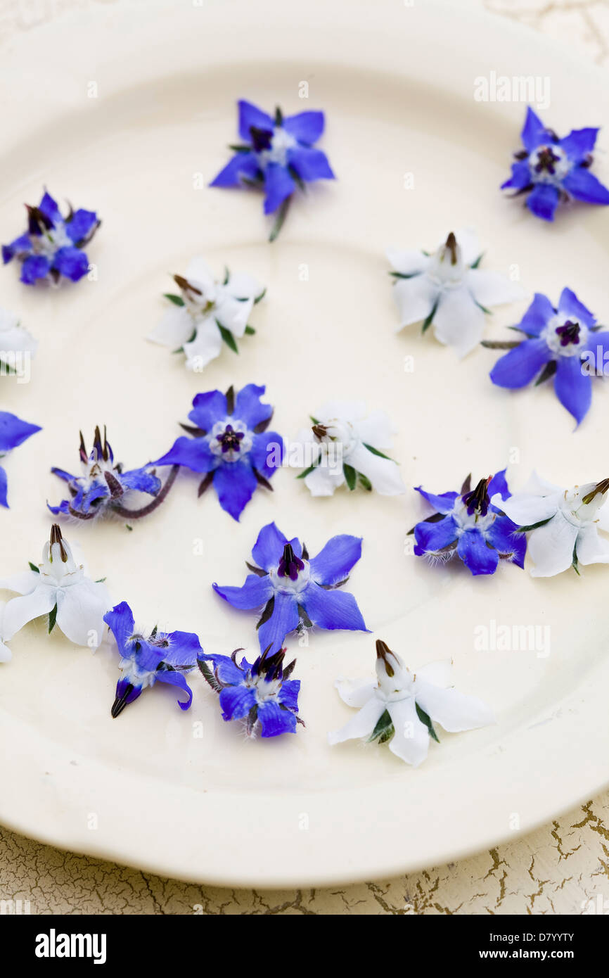 Blue and white edible borage flowers on a white plate stock photo blue and white edible borage flowers on a white plate mightylinksfo