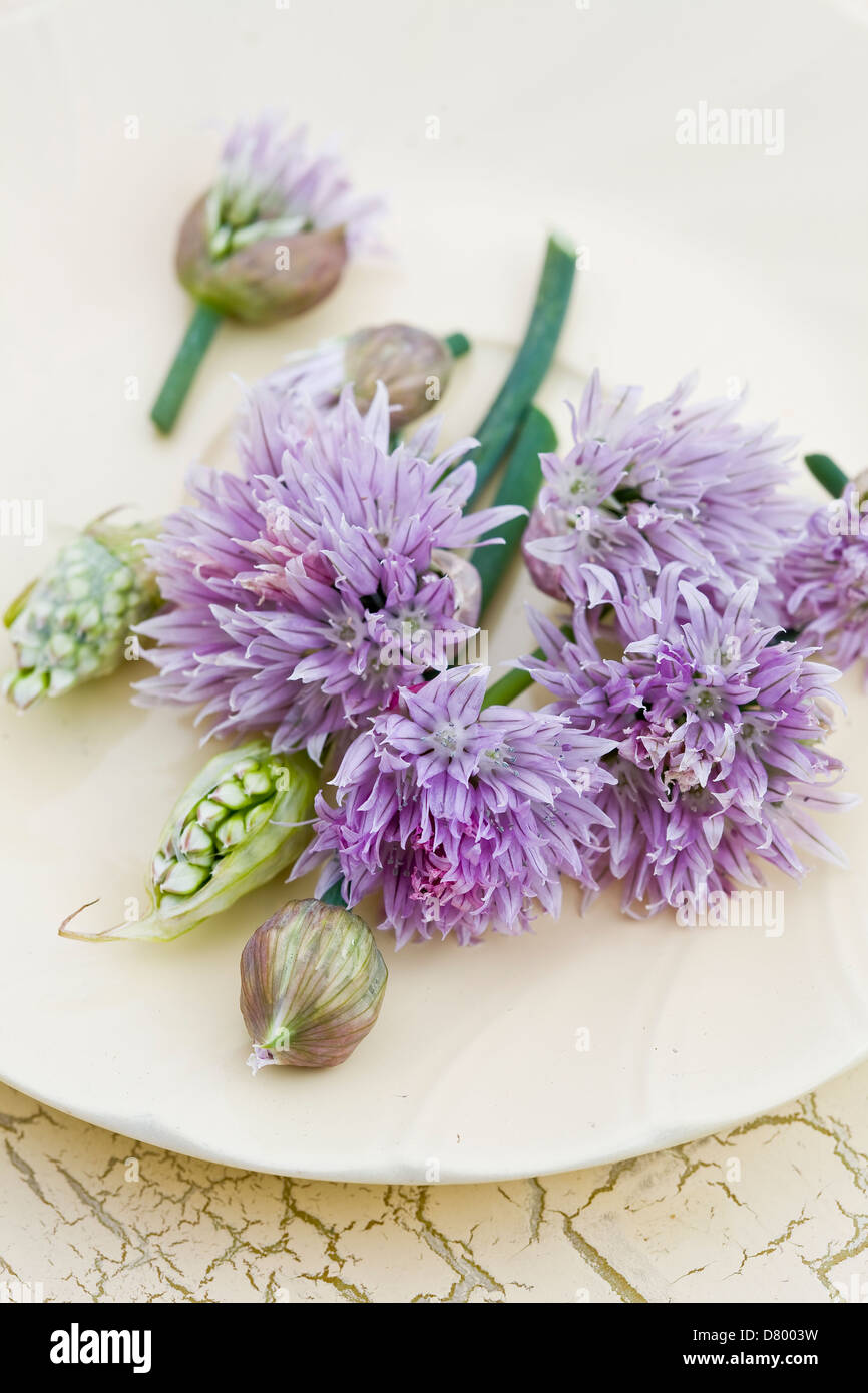 Purple and white edible chives flowers on a while plate. - Stock Image