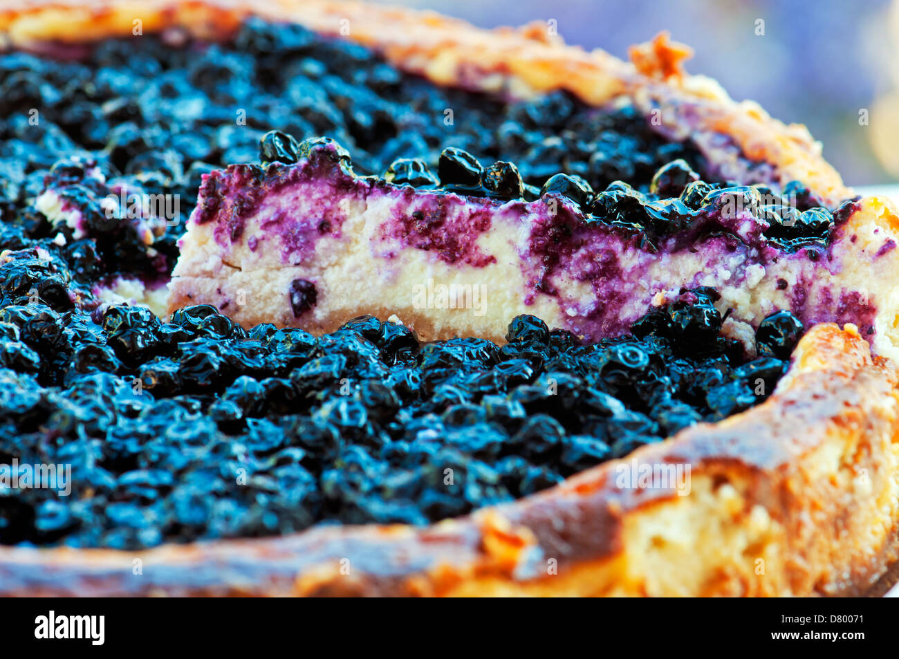 Cheese cake with blueberry top - Stock Image