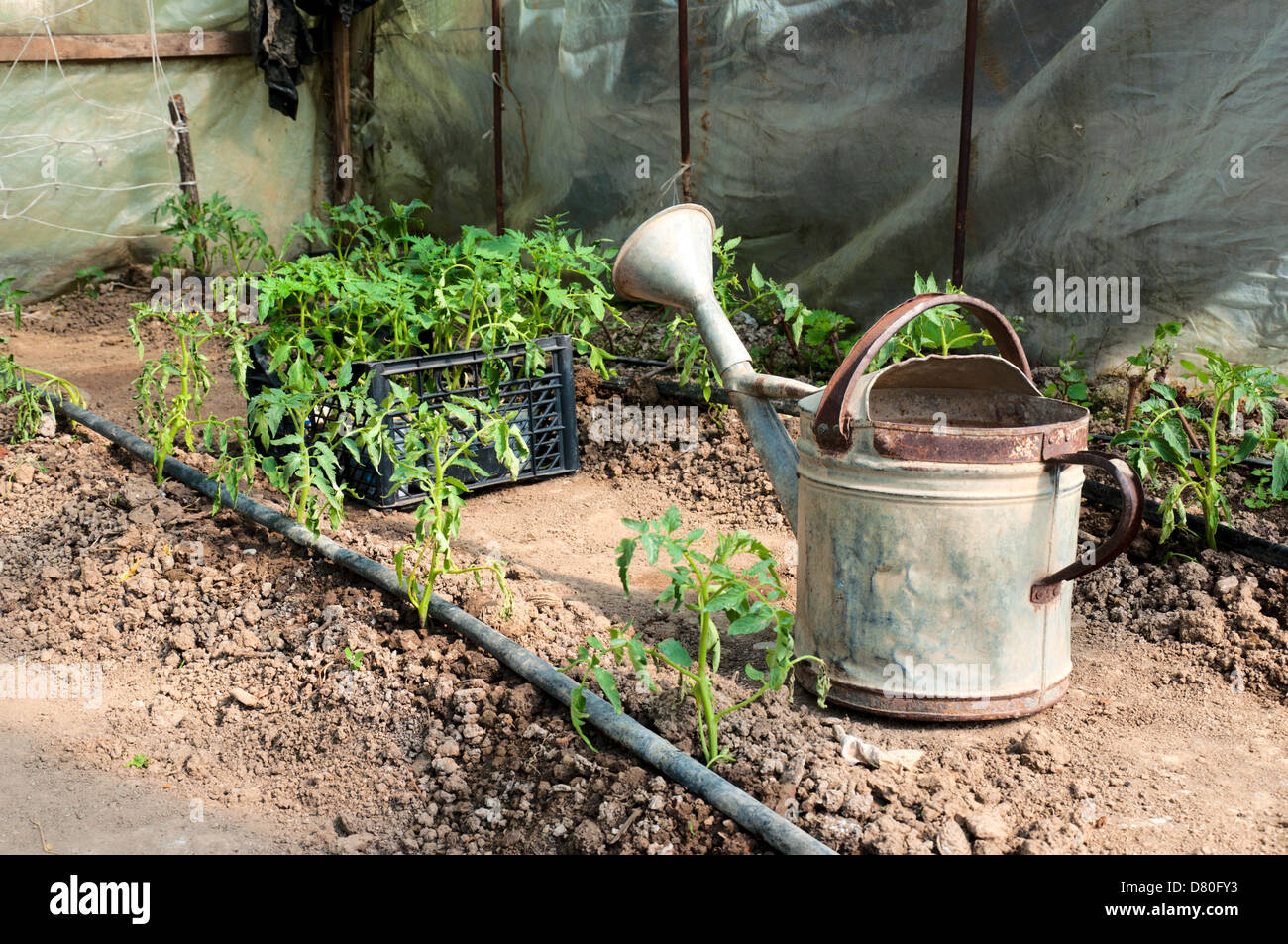 Old water basket in the garden - Stock Image