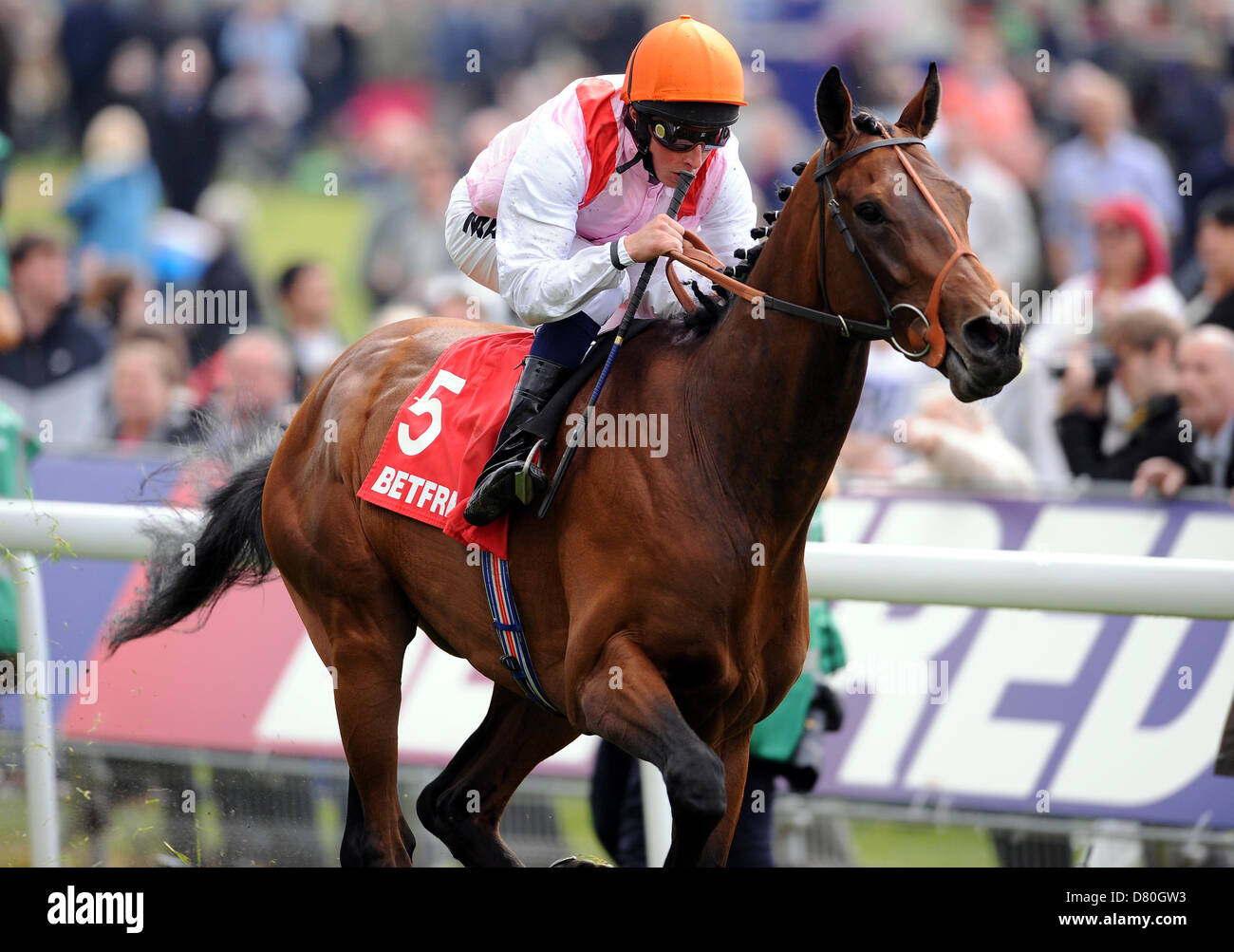 LIBERTARIAN RIDDEN BY WILLIAM THE BETFRED DANTE STAKES YORK RACECOURSE YORK ENGLAND 16 May 2013 - Stock Image