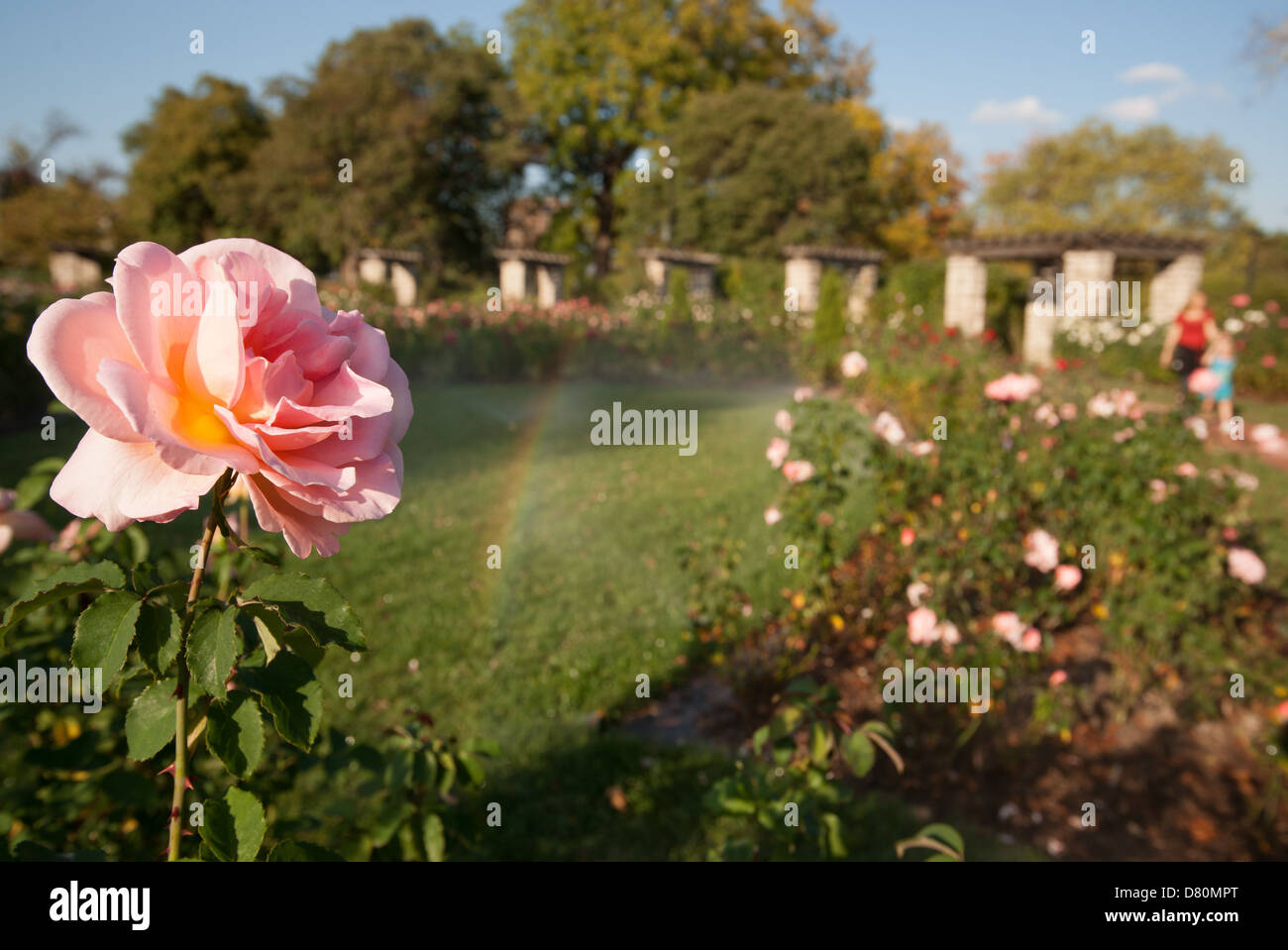 Jacob Rose Stock Photos & Jacob Rose Stock Images - Alamy