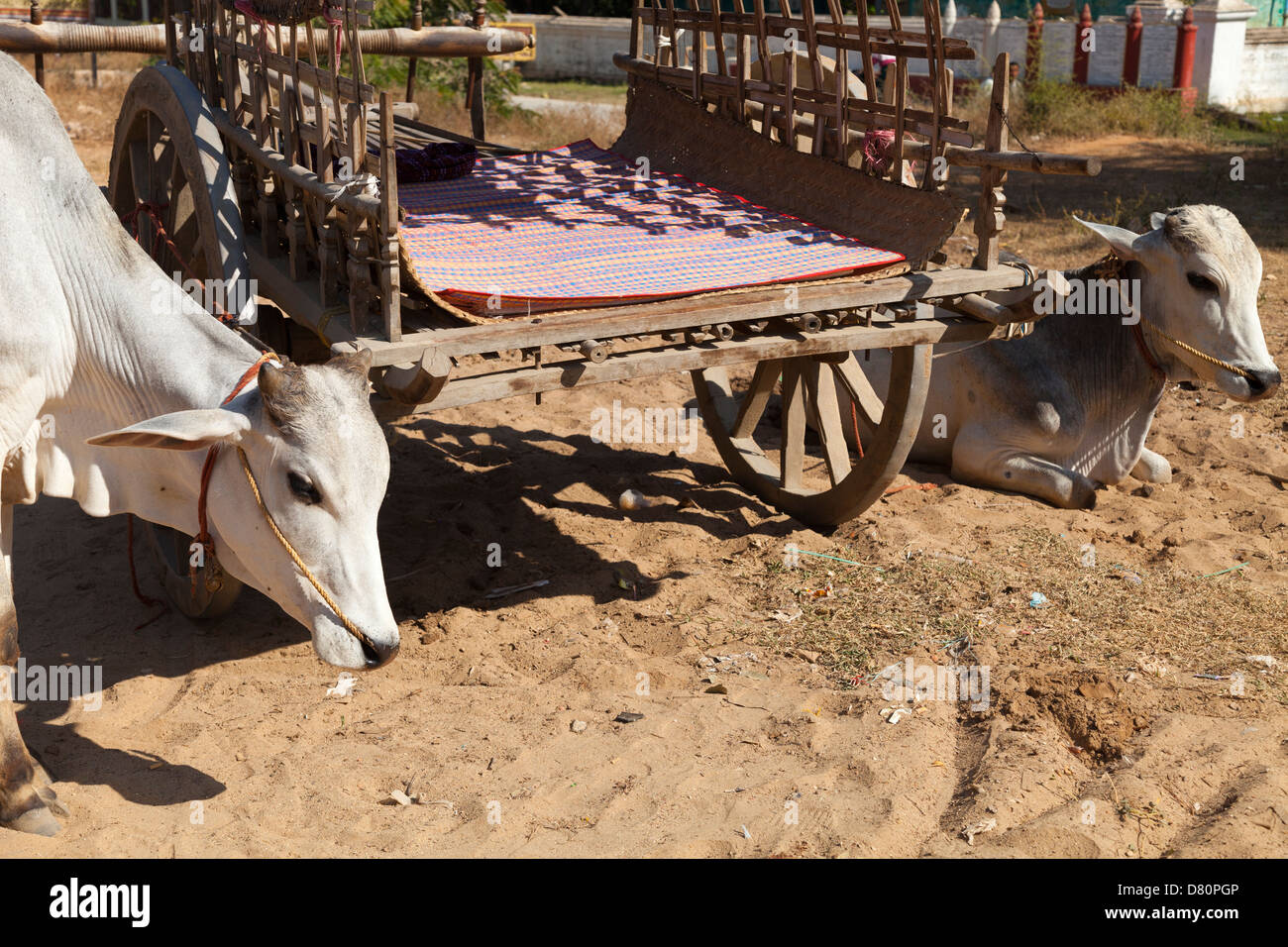 Bullocks resting by their cart in Mingun, Myanmar - Stock Image
