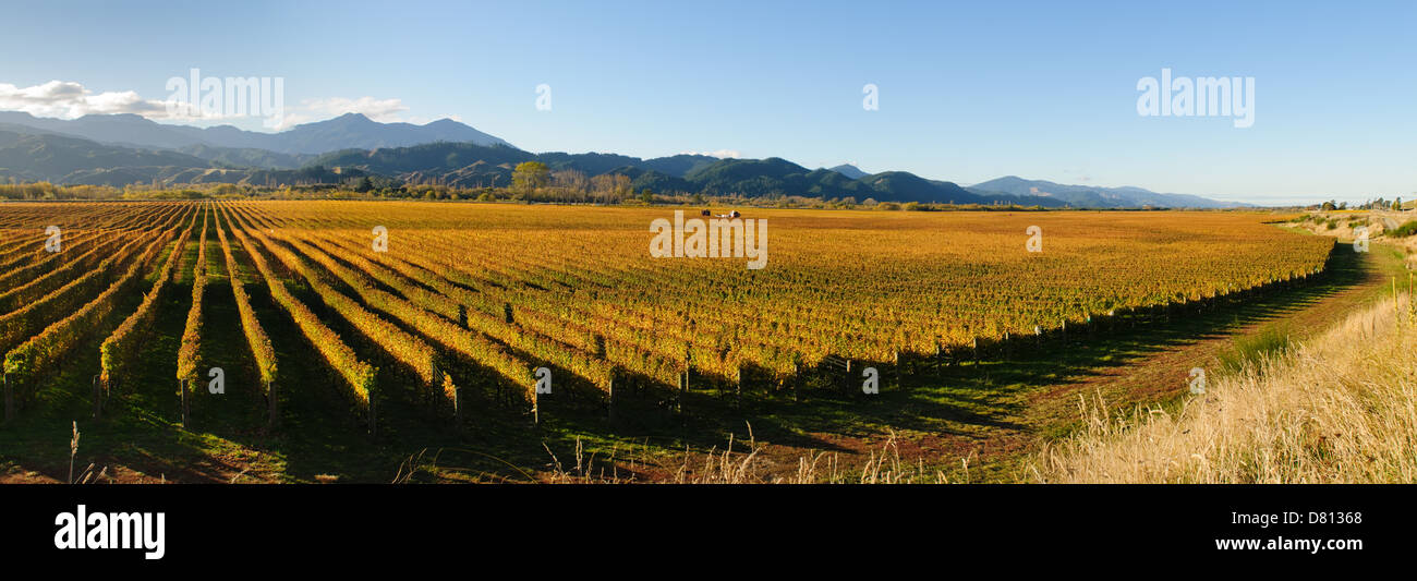 Panoramic view of vineyards in the Marlborough district of the South island of New Zealand - Stock Image