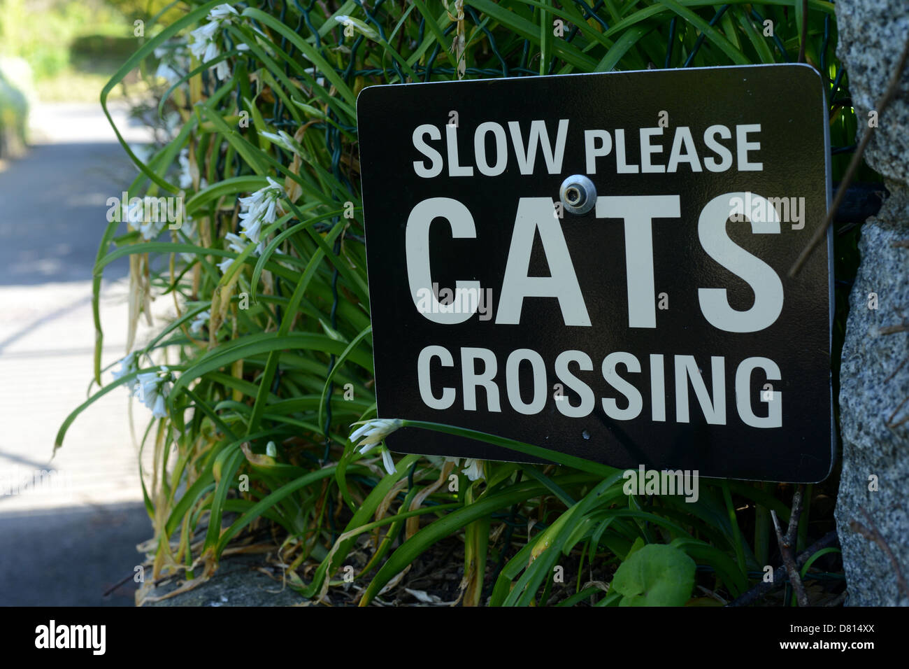 Cats crossing sign - Stock Image
