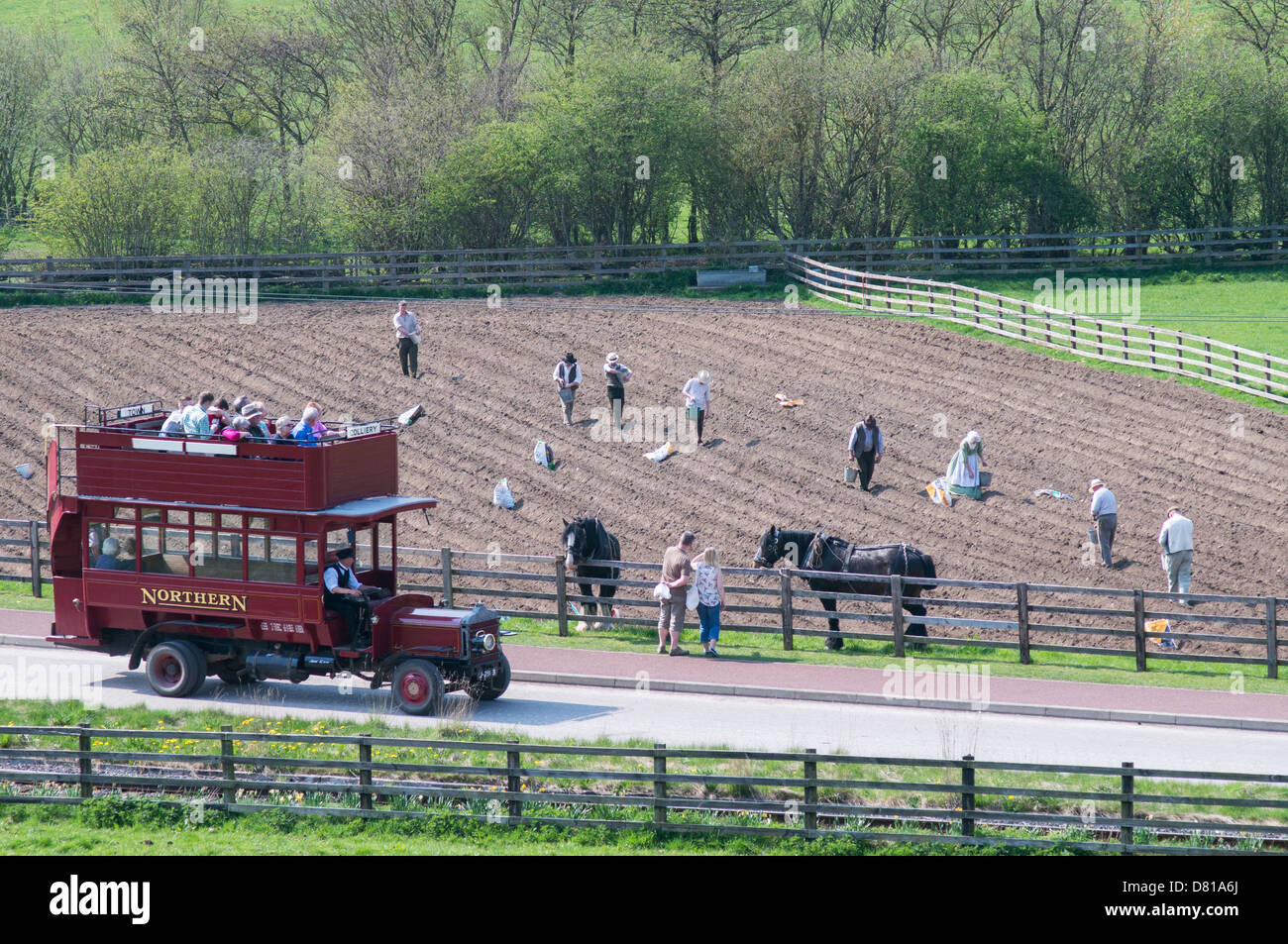 A replica Northern bus passes workers planting potatoes in field Beamish Museum north east England UK Stock Photo