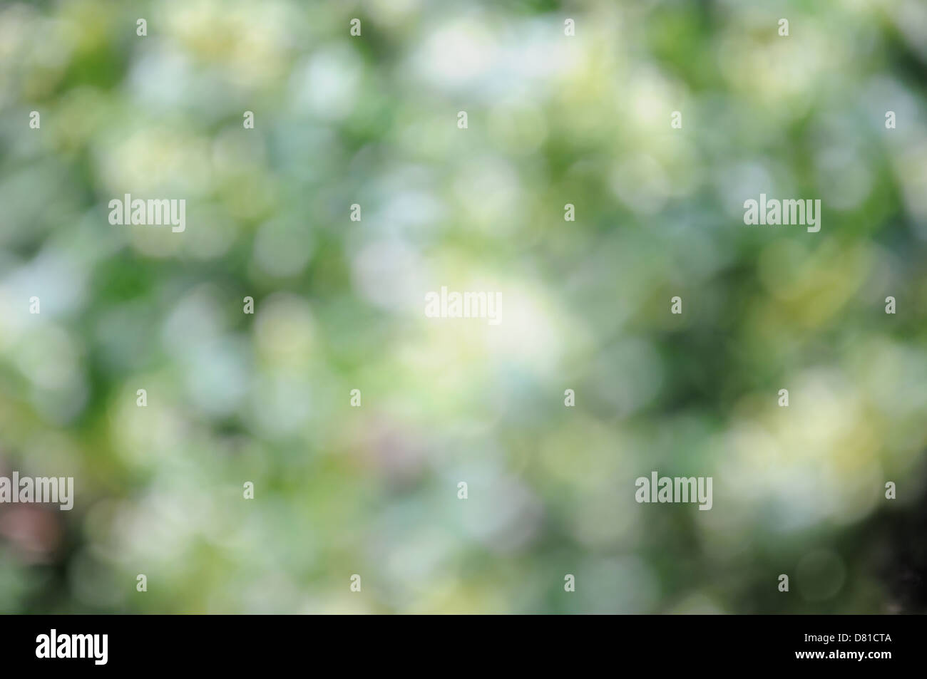 Green and white blurred background for accepting text - Stock Image