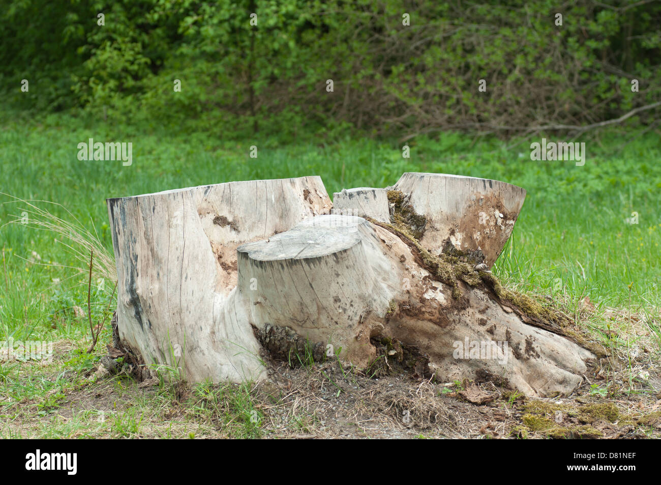 A tree stub in the park - Stock Image