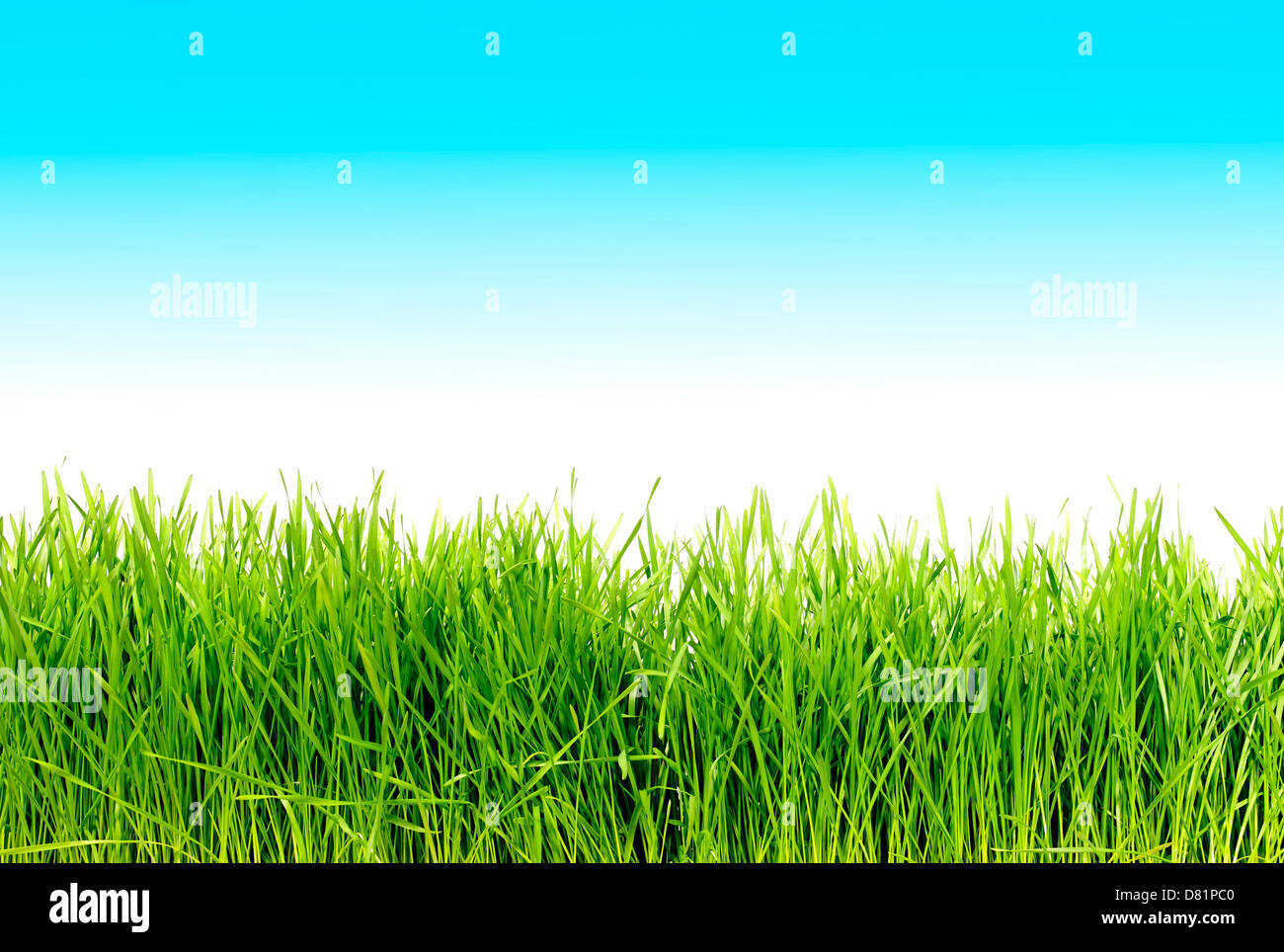 long blades of grass cut out onto a fading blue background - Stock Image