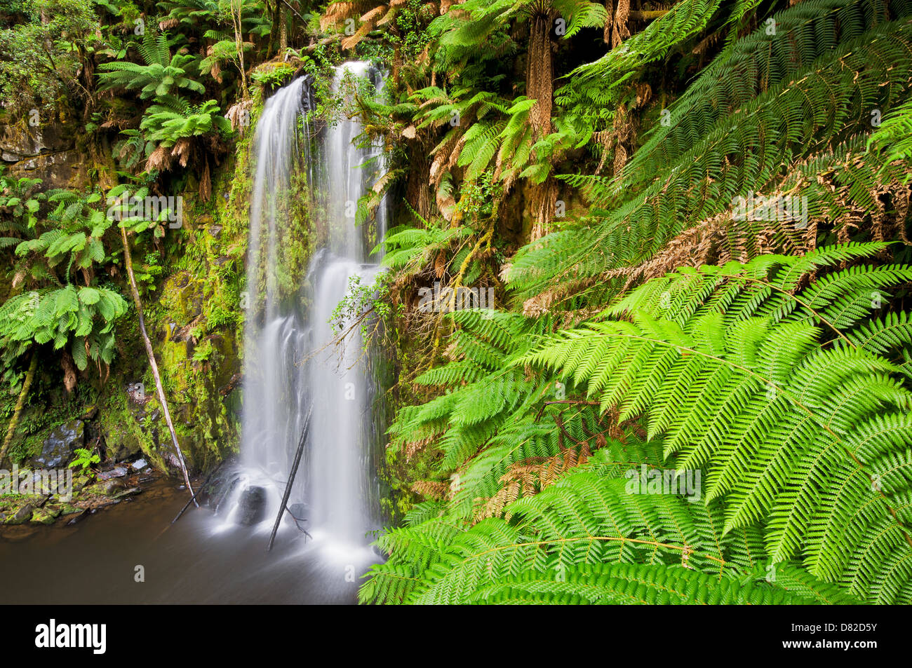 Beauchamp Falls in Great Otway National Park. - Stock Image