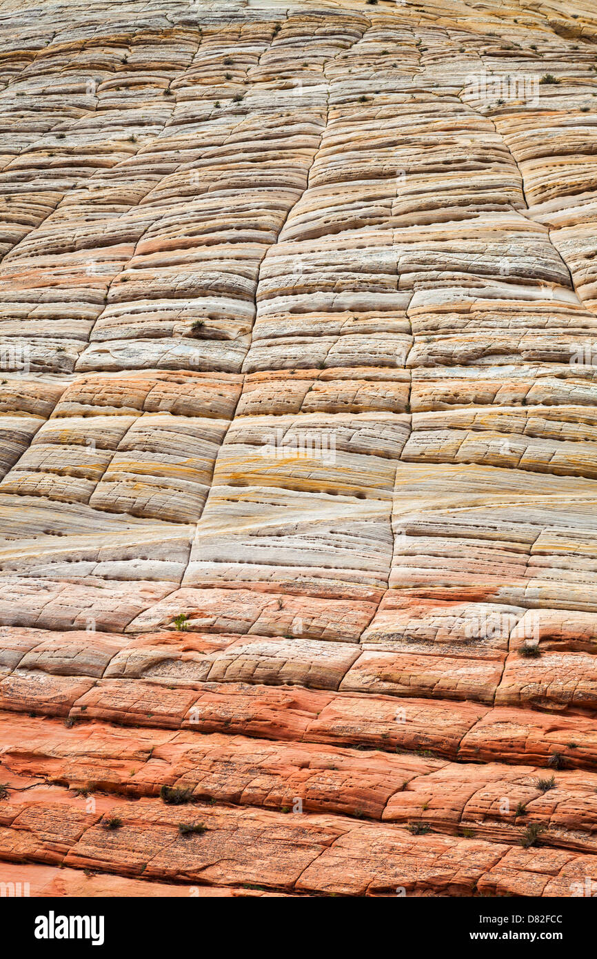 Close up checkerboard mesa, Zion National Park, Utah - Stock Image
