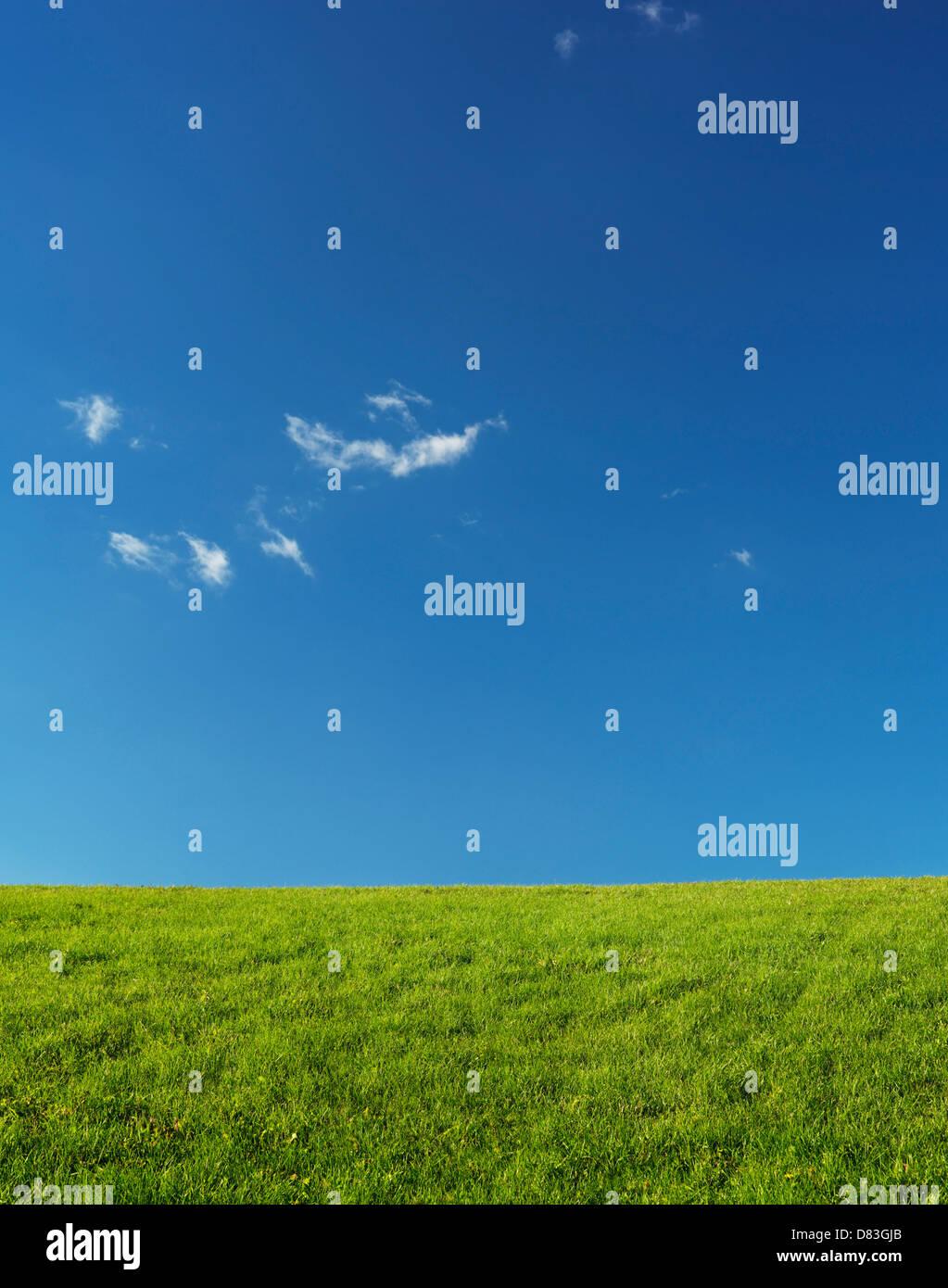 Green grassland landscape under blue clear sky lit by sunlight. Nature backdrop background. - Stock Image