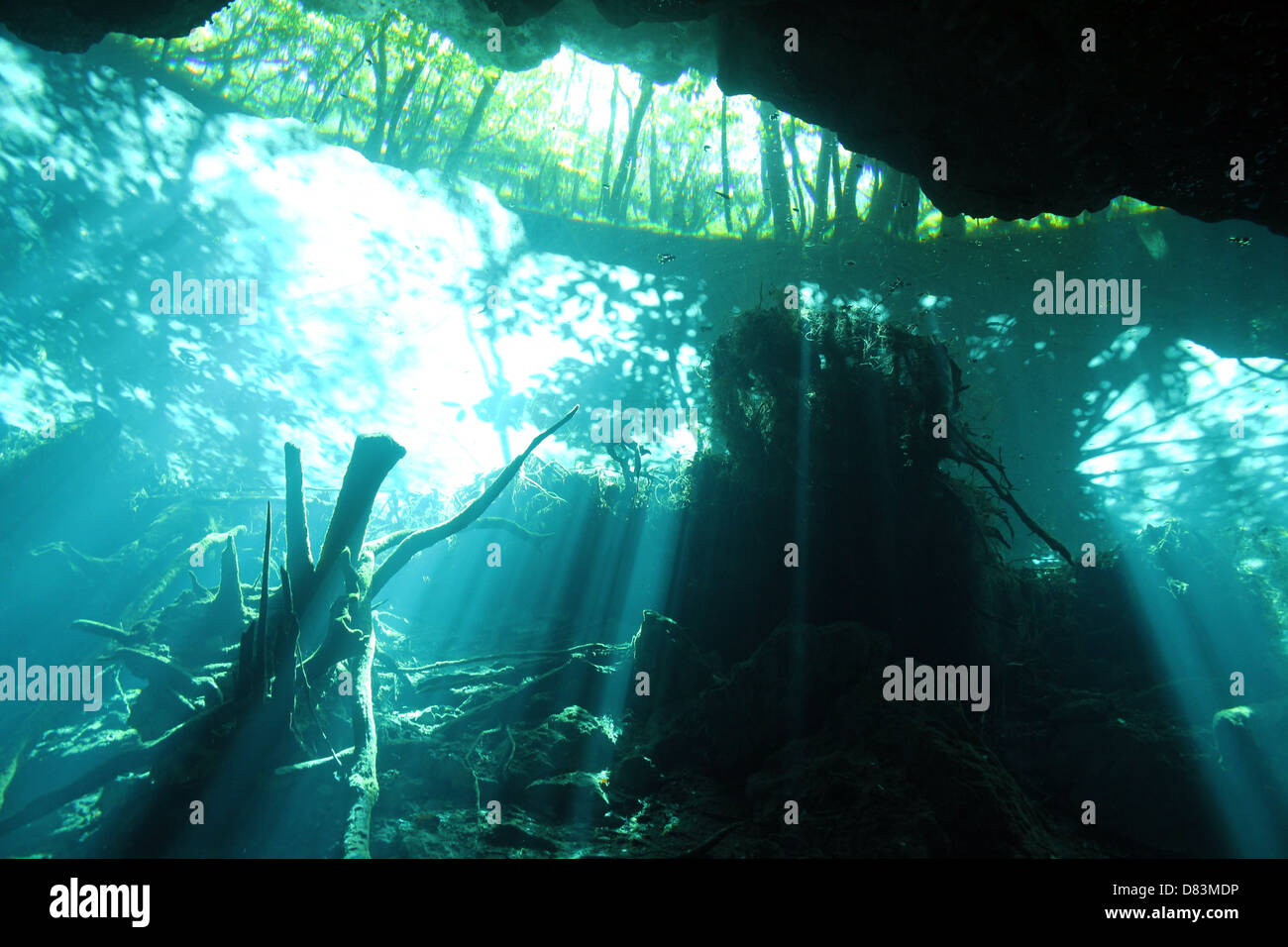 Sunbeams Breaking Through the Surface in Chac Mool Cenote, Playa del Carmen, Mexico - Stock Image