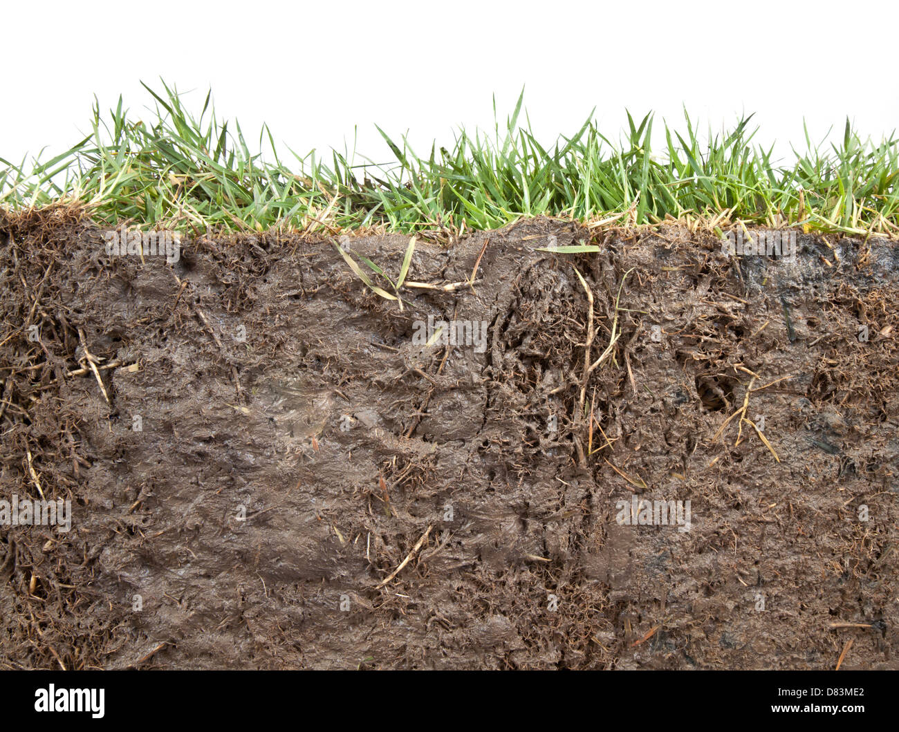 cross section of grass and soil against white background - Stock Image