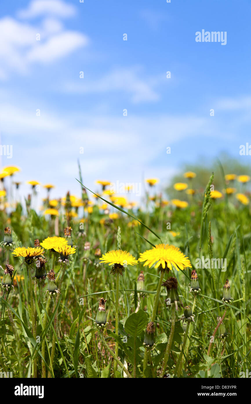 Spring meadow - Stock Image