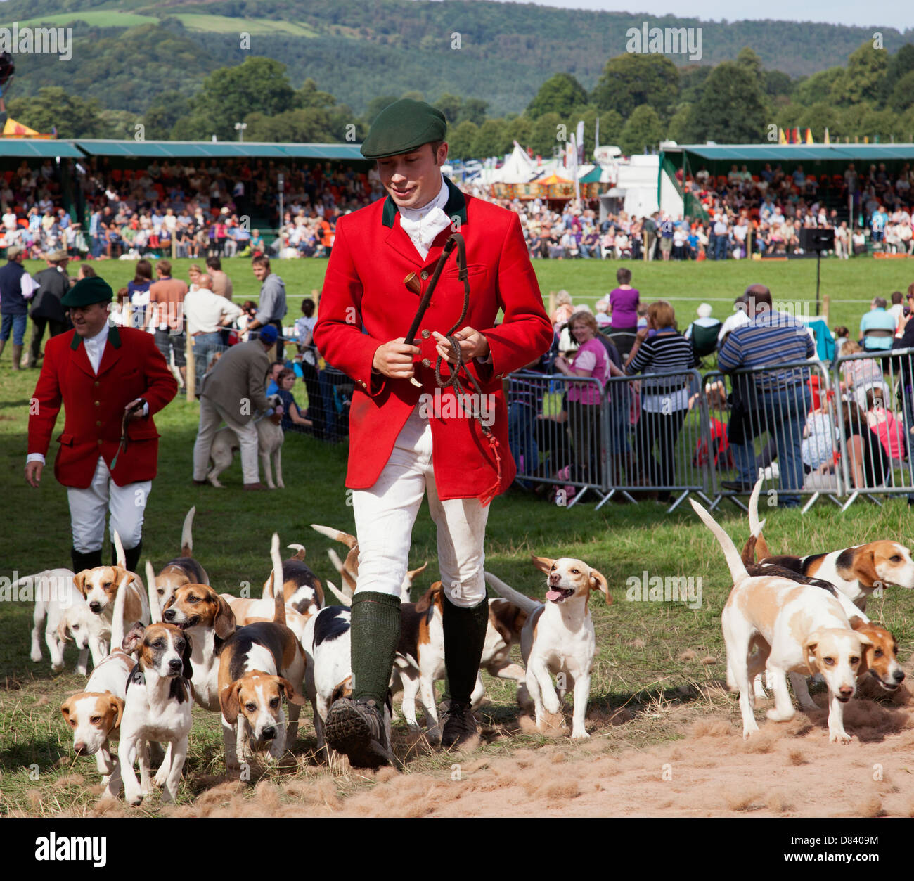 Huntsman with hounds at the Chatsworth Game Fair, Derbyshire, England, U.K. - Stock Image