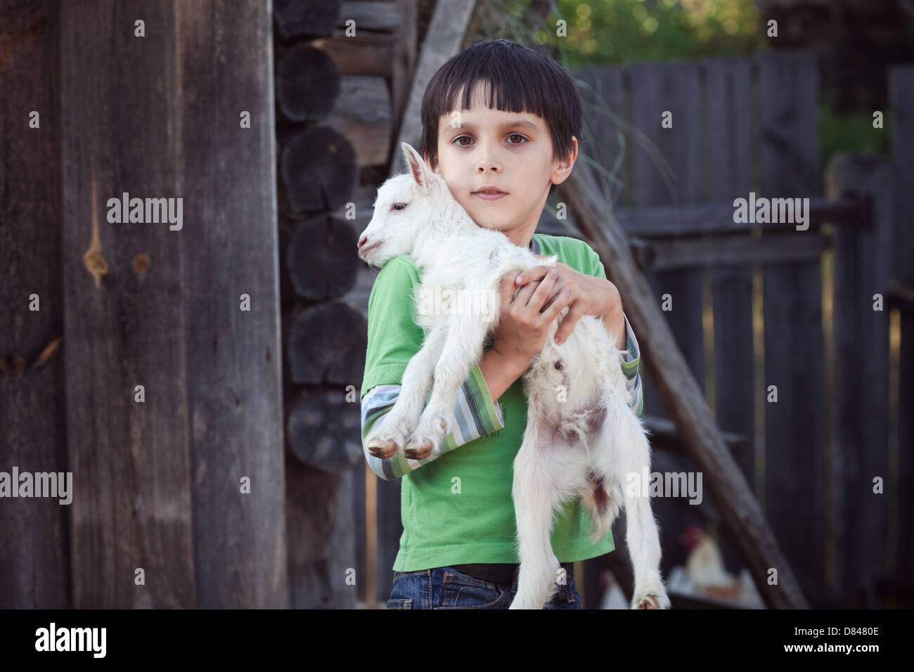 boy with little goat - Stock Image