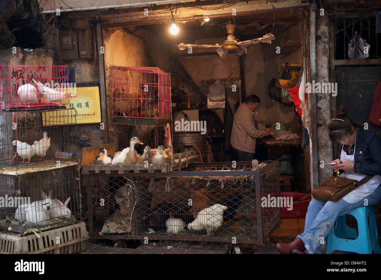 Live poultry are on sale in Chongqing, China. 09-May-2013 Stock Photo