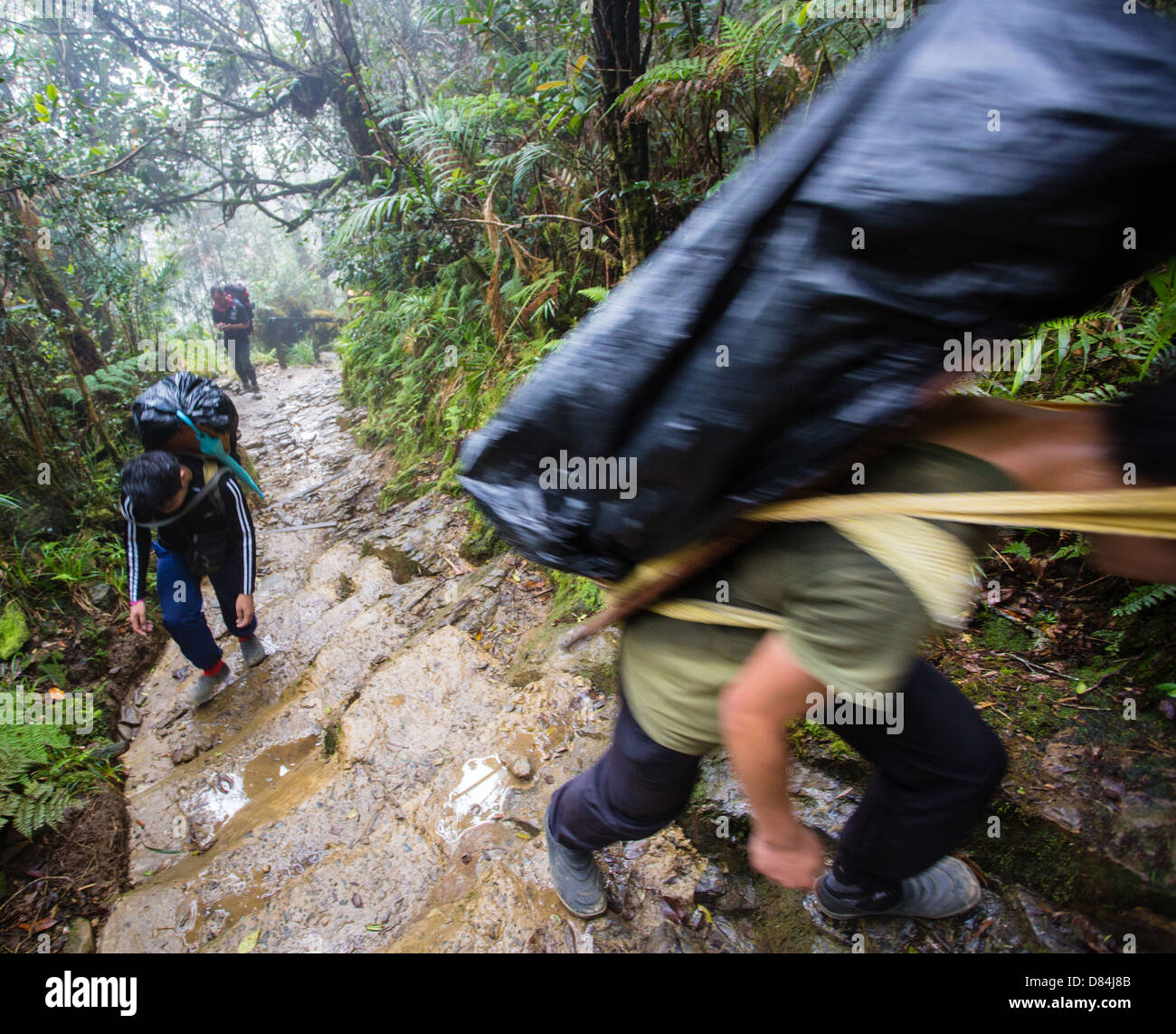 Porters labouring up the steep wet paths of Mount Kinabalu in Borneo with heavy supplies for Laban Rata hostel - Stock Image