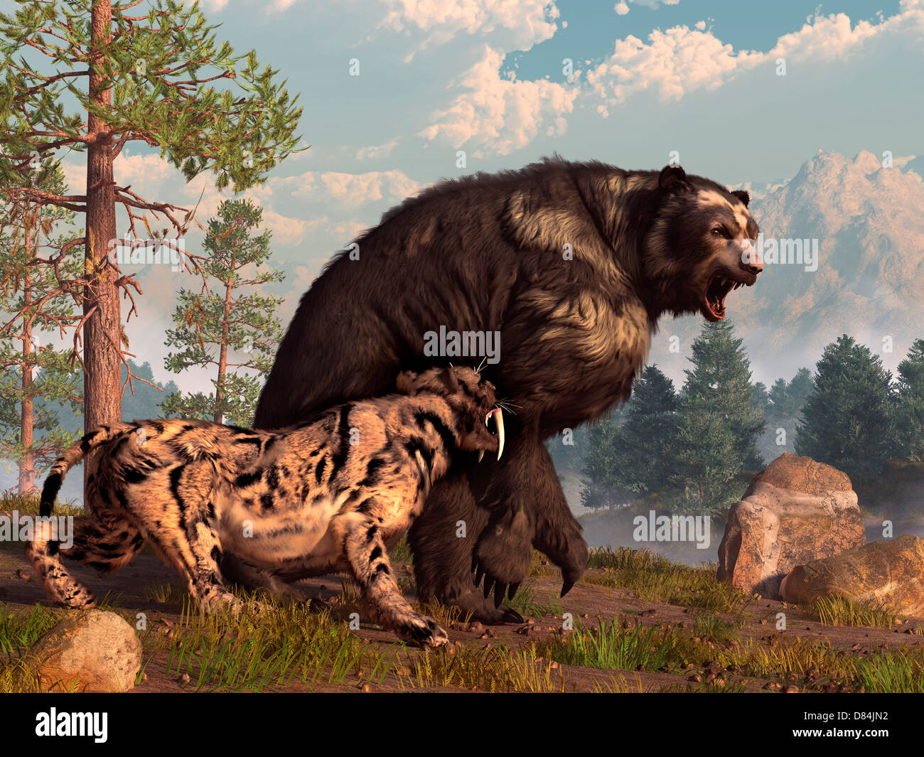 A saber-toothed cat tries to drive a short-faced bear out of its territory. The bear is annoyed and roars back in - Stock Image