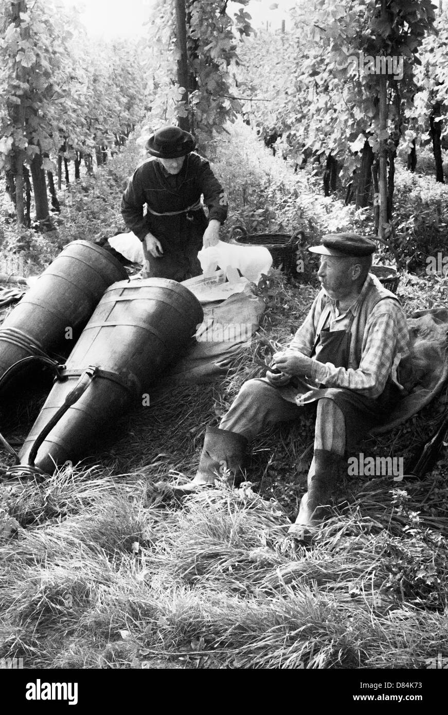 1963 Elderly grape pickers at lunchtime in vineyard Alsace France Europe - Stock Image
