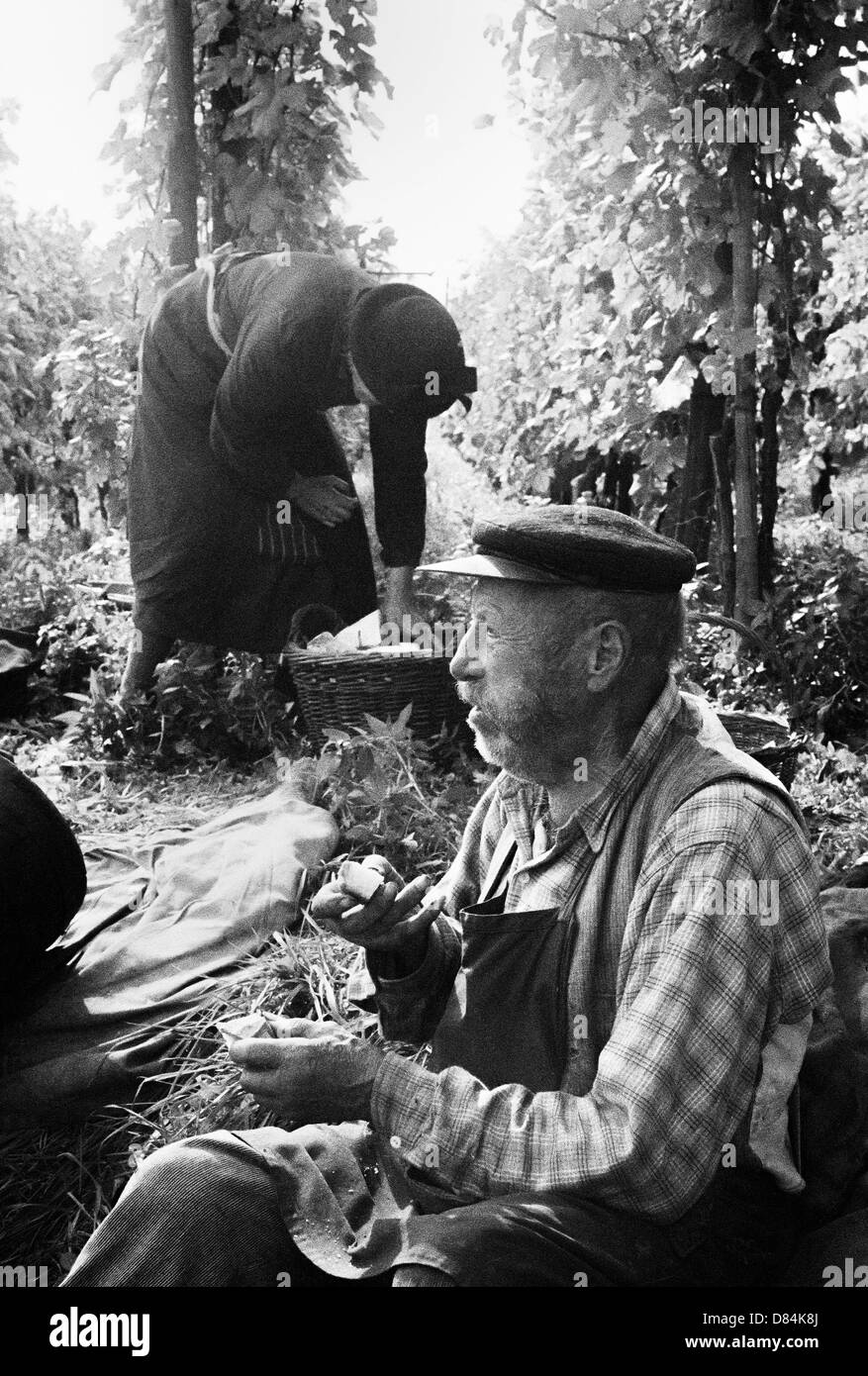 Autumn 1963 senior grape pickers picnicking in vineyard Alsace France Europe - Stock Image