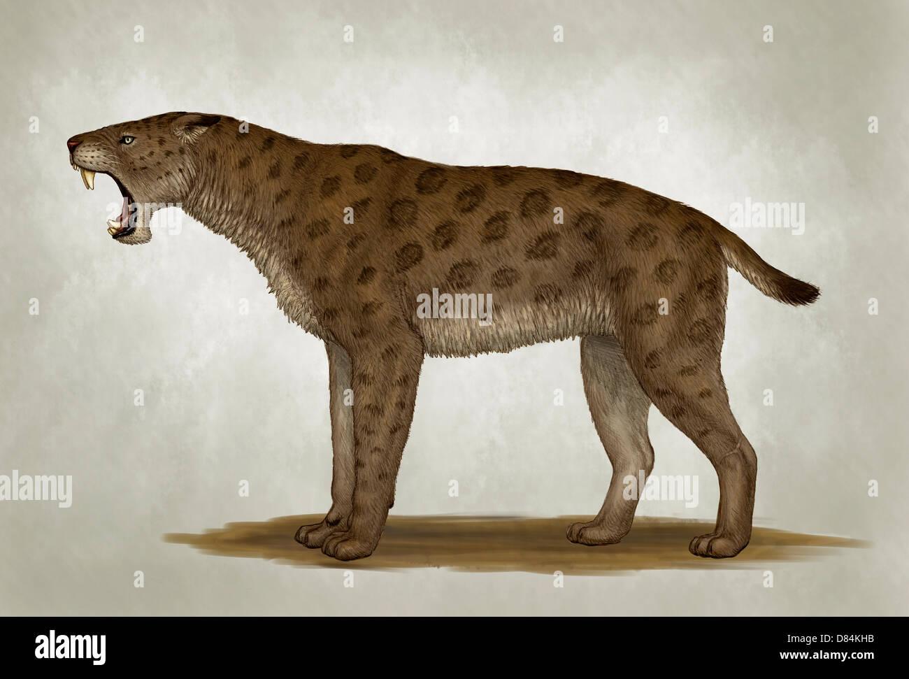 Homotherium latidens, a big sabertooth cat of the Pliocene Epoch. - Stock Image