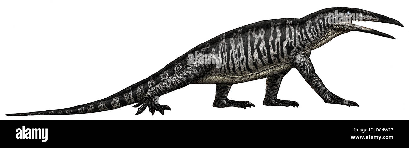 Teraterpeton, an enigmatic archosauromorph from the late Triassic. - Stock Image