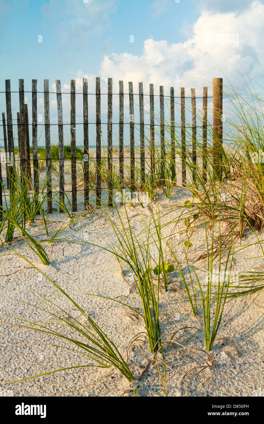 A sand dune with sea grass along a sand fence on the beach. - Stock Image