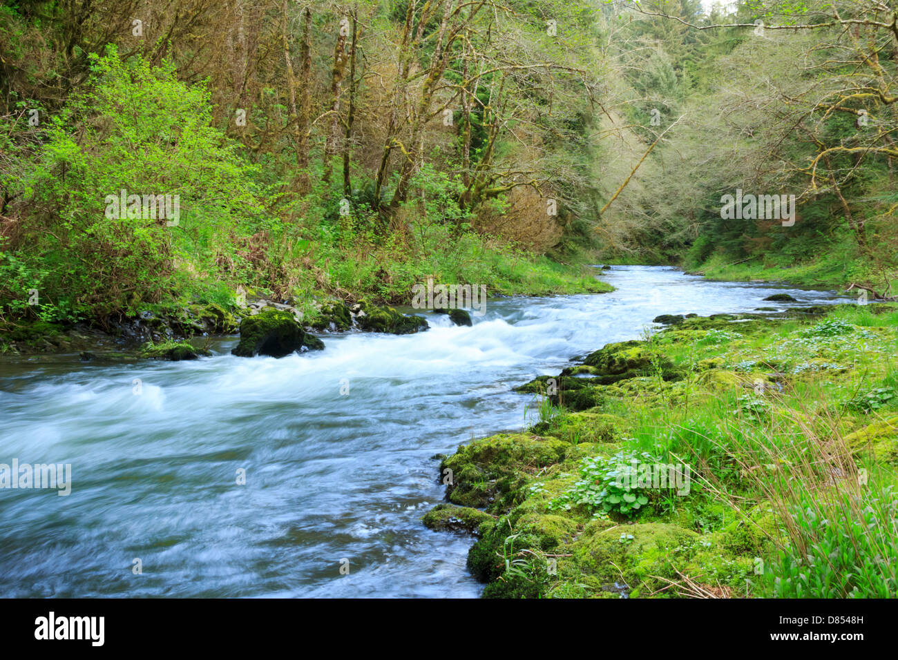 41,378.08473 Beautiful spring landscape of the Nestucca River, with low and wide-angle view of rapids flowing through Stock Photo