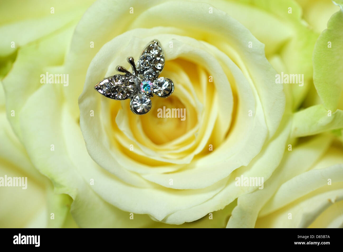 Closeup of rose with butterfly jewel - Stock Image