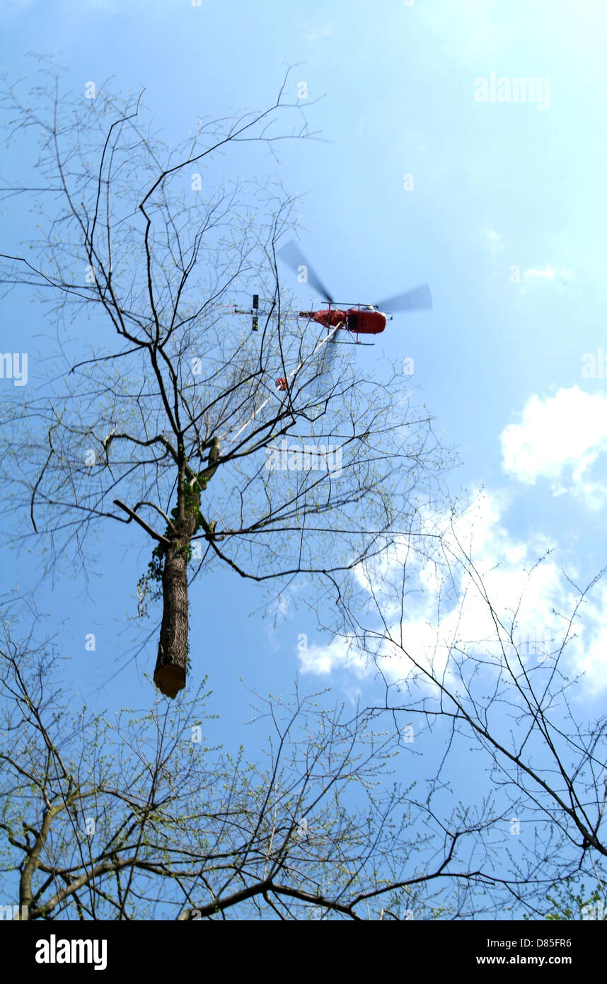 Helicopter carrying a tree - Stock Image
