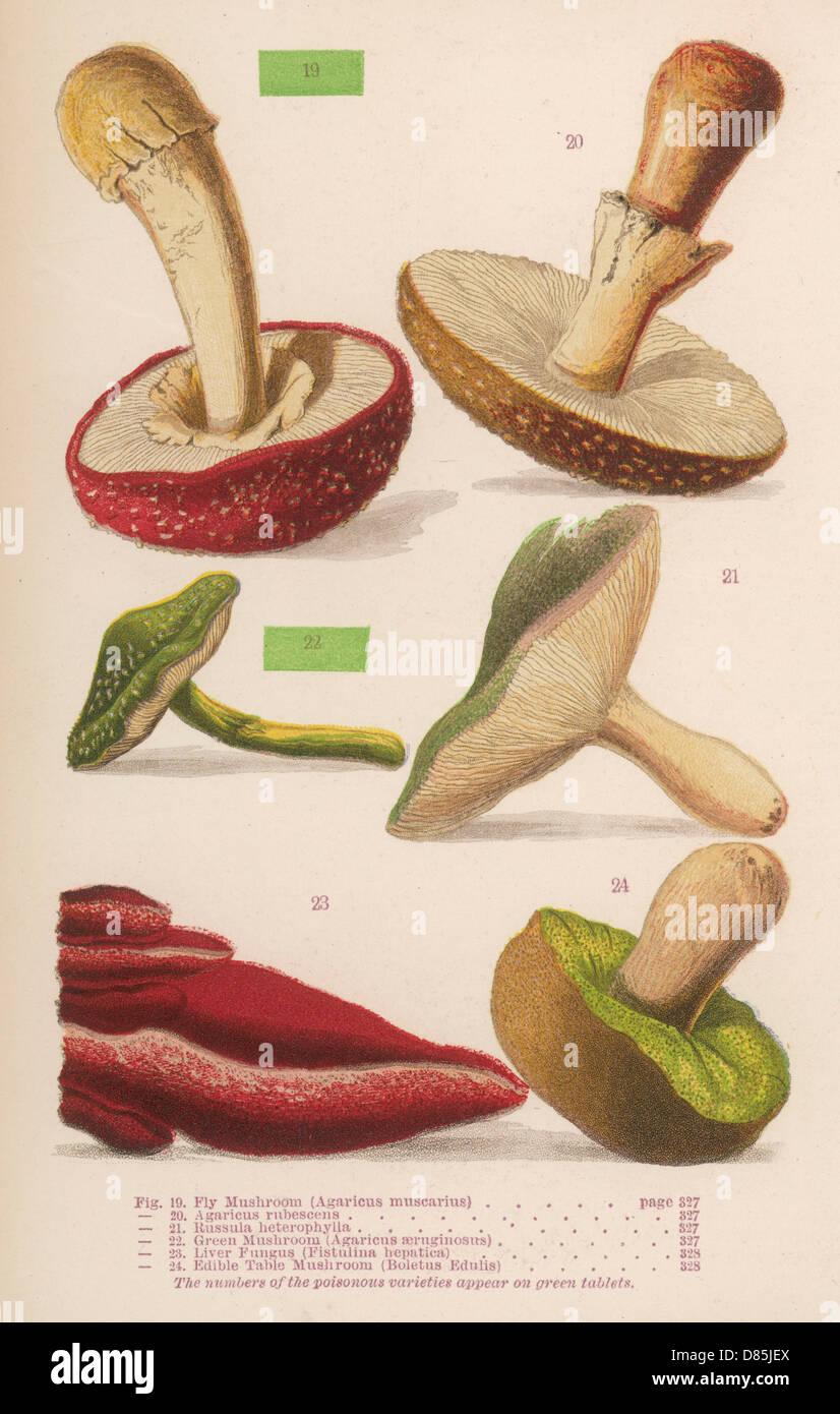 Varieties Of Mushrooms - Stock Image