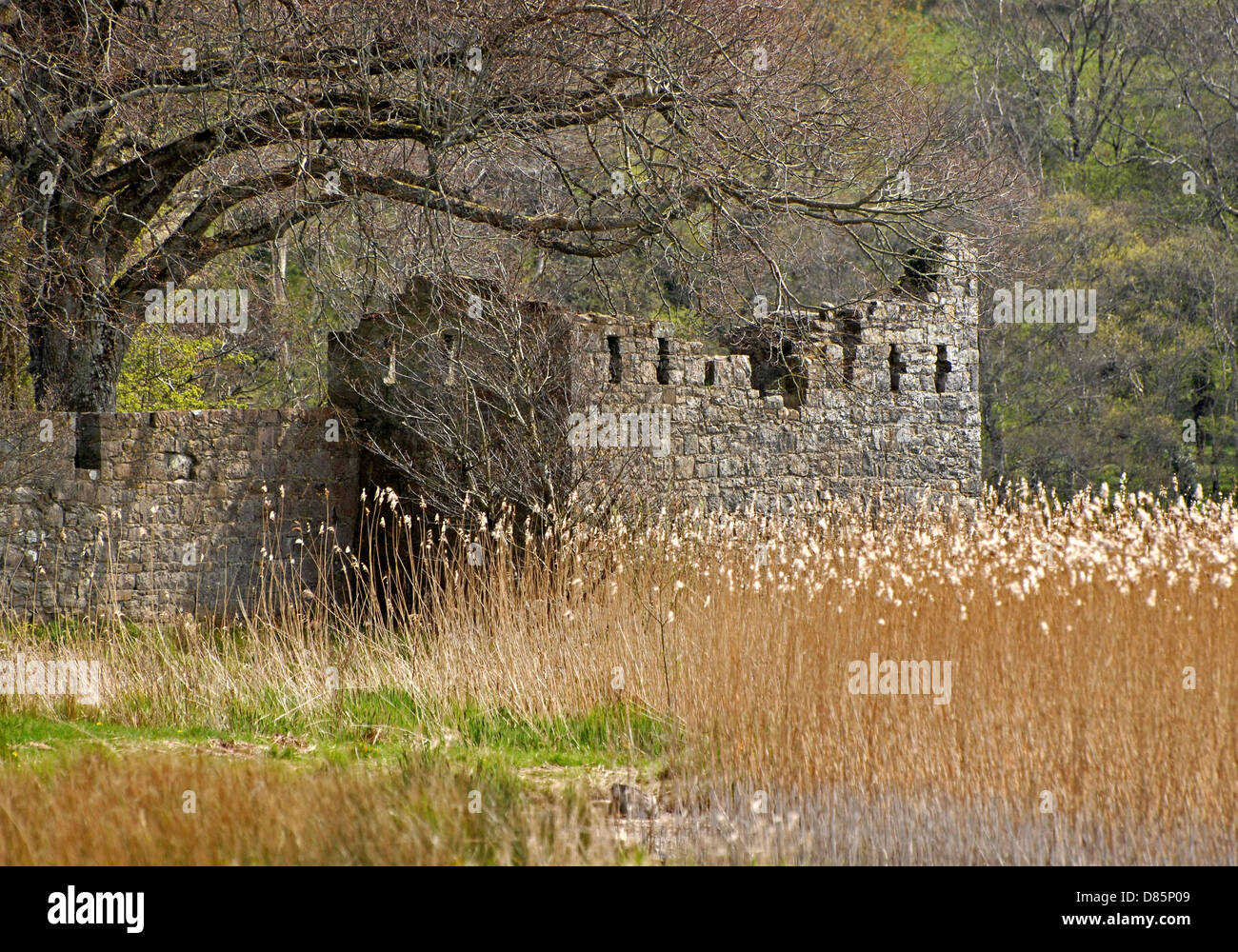 Crom Castle Estate, Upper Lough Erne, County Fermanagh, Northern Ireland - Stock Image