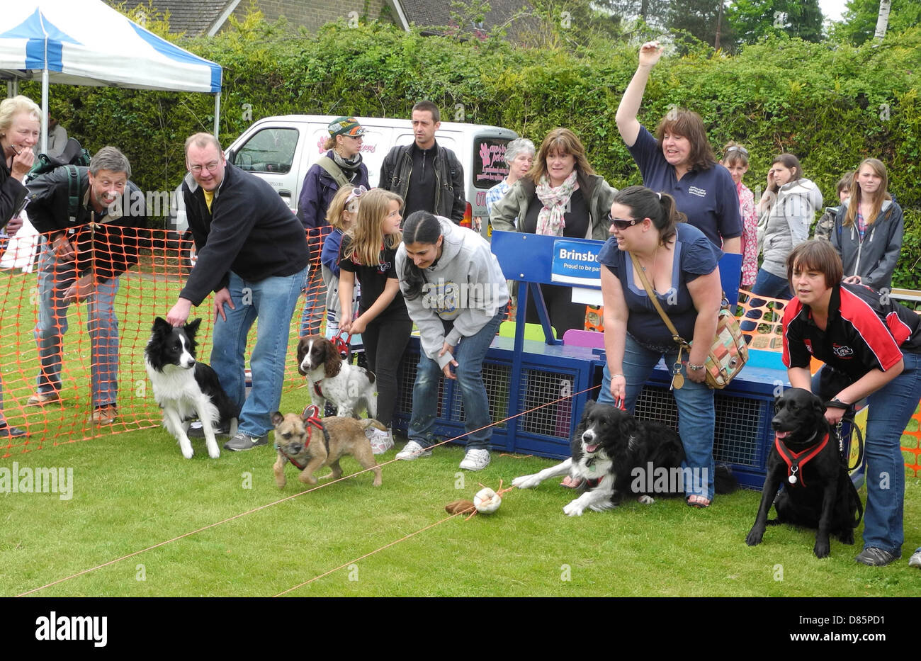 The start of a dog terrier race at a country fair - this was at Brinsbury Agricultural College open day in Sussex - Stock Image