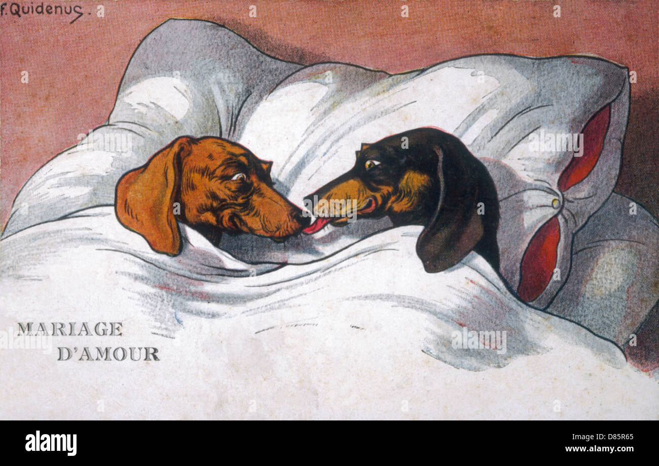 Dachshund Dogs Sleeping In Bed - Stock Image