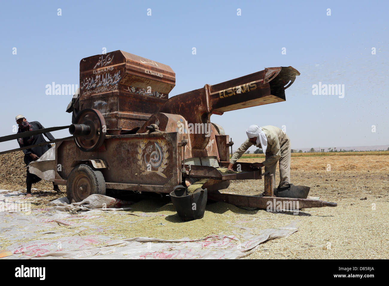 Thresher in a wheat field in Upper Egypt Stock Photo