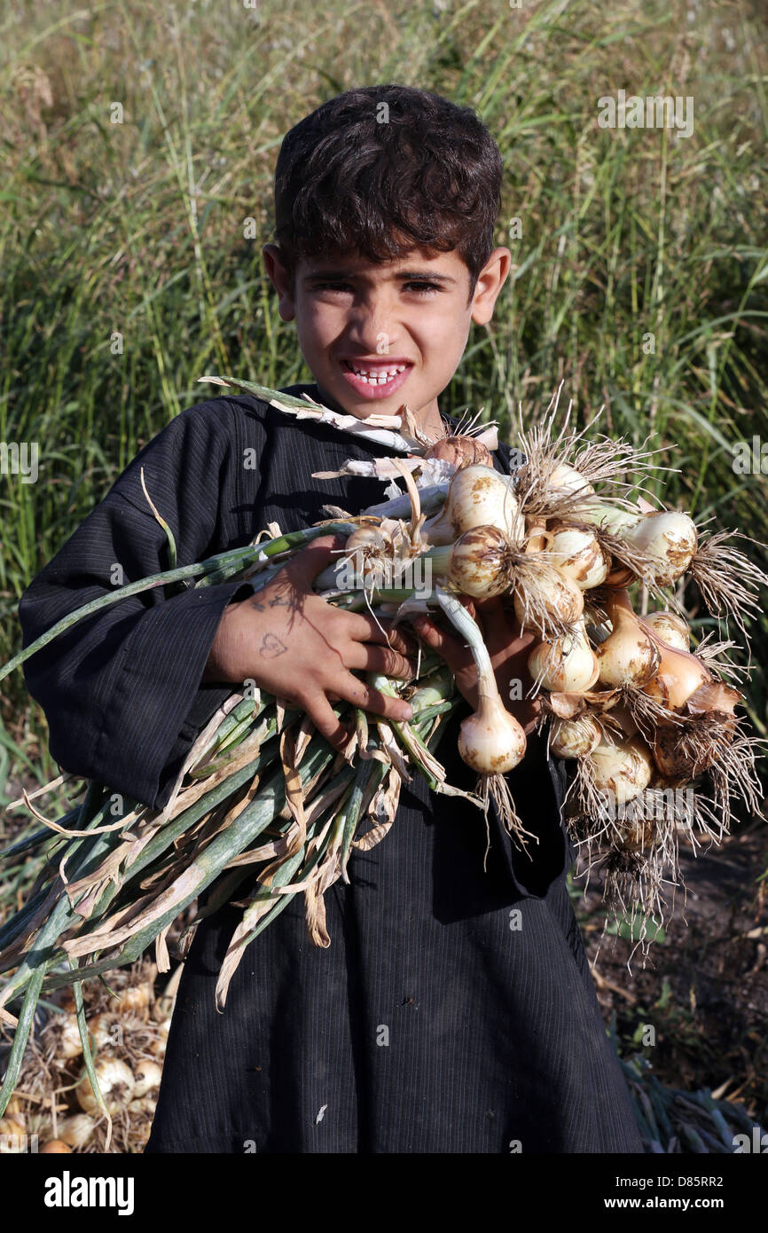 boy harvesting onions, Upper Egypt Stock Photo