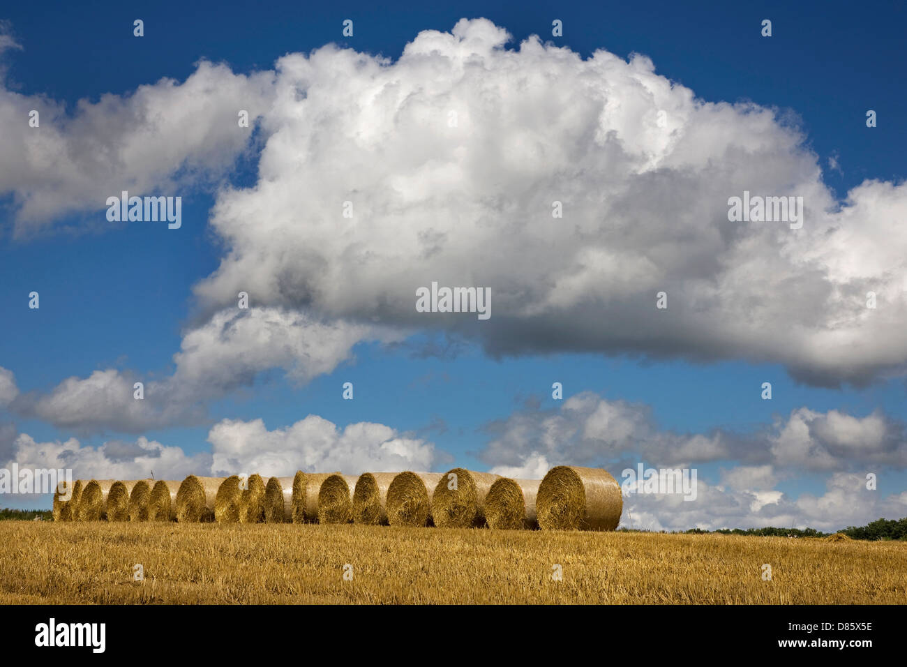 Cumulus mediocris clouds over field with round hay bales - Stock Image