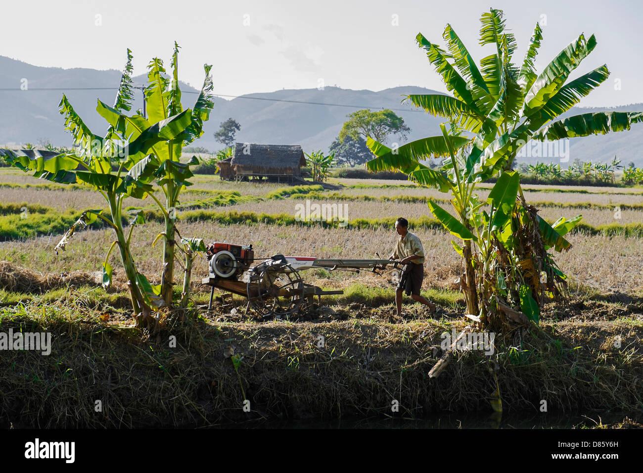 Farmer working on field, Nyaung Shwe, Myanmar, Asia - Stock Image